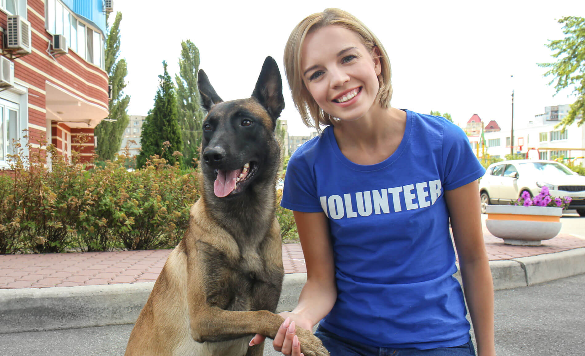 Charity Work with Animals
